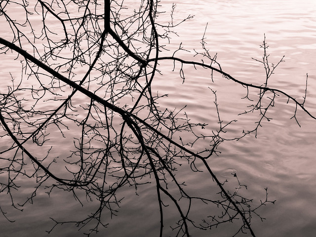 bare branches by the river