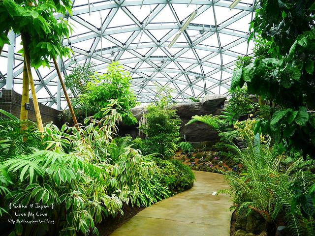 日本東京景點新宿御苑溫室植物 (8)