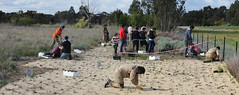 panorama: Tree and native grasses planting in Fawkner