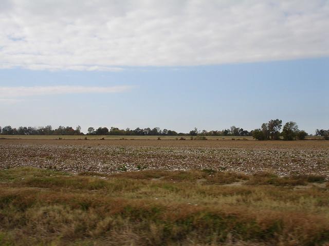 Cotton field at Doro Plantation