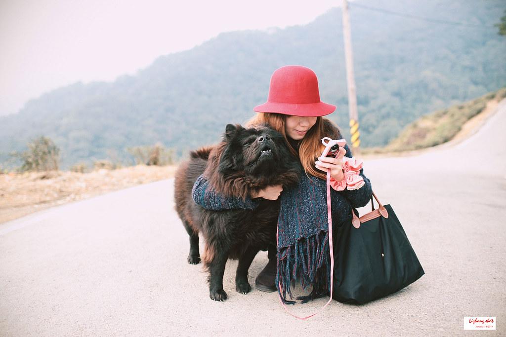 石碇八卦茶園溜鬆獅犬