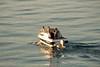 День 6. Закат на Женевском озере - на воде еще есть жизнь