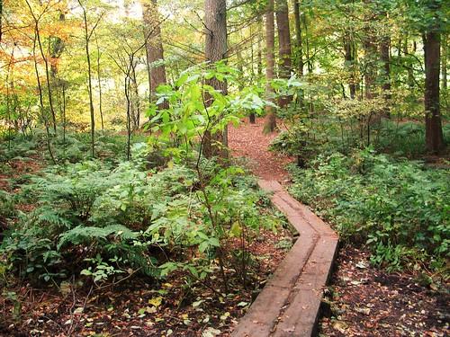 Gelt Woods (1)