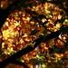 Autumns Magic by Gavin Clack