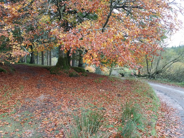 Autumn in Fernworthy Forest