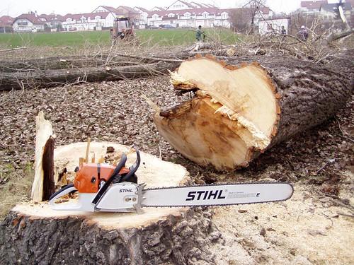 2005 - Kácení stromů