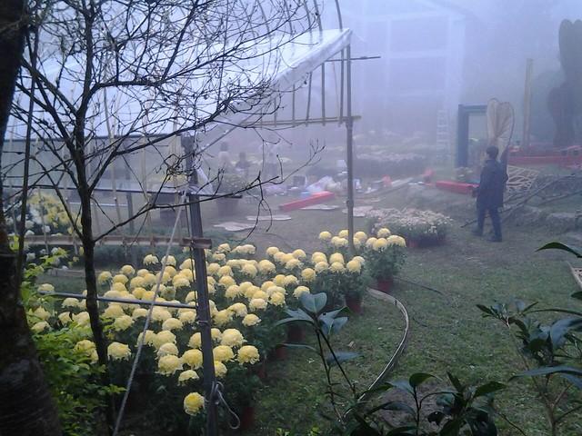 24463霧裡看花