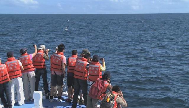 抹香鯨為何會擱淺?導演:簡毓群。圖片來源:我們的島。