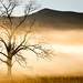 """First light behind the """"Tree"""" by K. Stewart"""