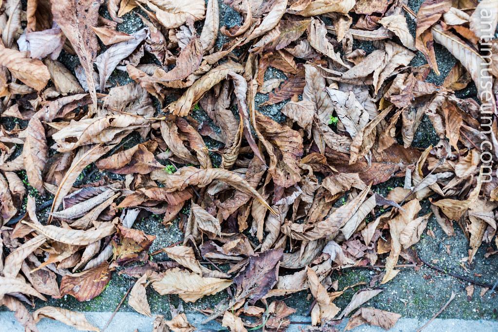 16-autumn-30102016-5473.jpg