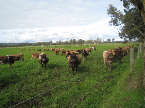 Why Rotational Grazing Makes, Canon DIGITAL IXUS 860 IS