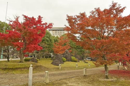 【写真】2014 紅葉 : 智積院/2020-09-07/IMGP7559
