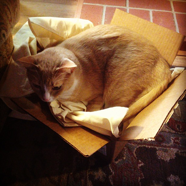 Buddy in a box