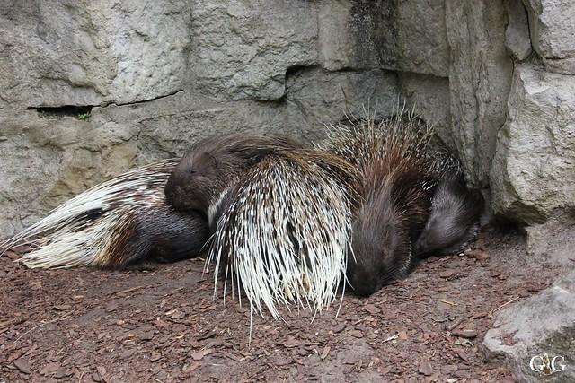 Sonntags-Besuch im Tierpark Friedrichsfelde 04.10.201510