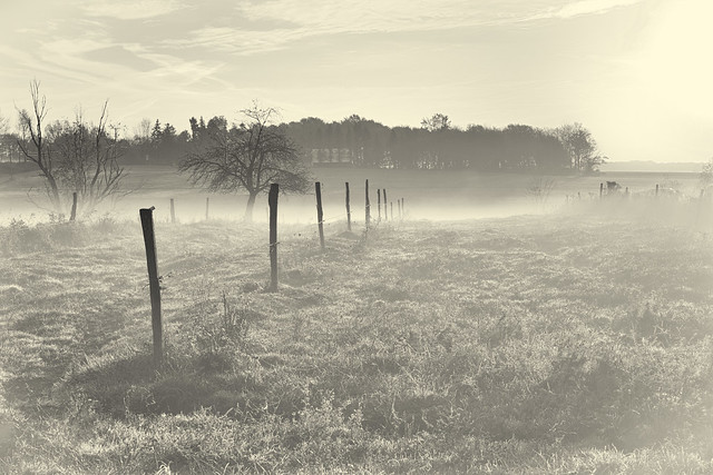 IMG_6728 Morning Mist over the Pasture BW