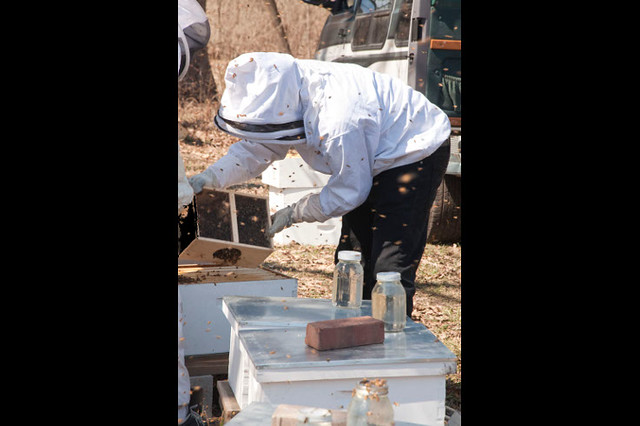 man in a bee suit handles a hive
