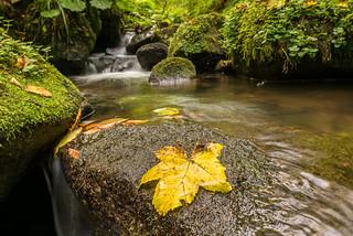 Streams, Rivers, Waterfalls and Lakes