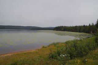 065 Lake Birch