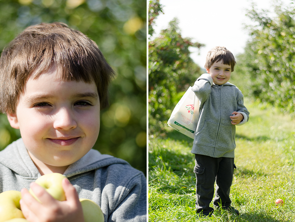 apple picking collage 1