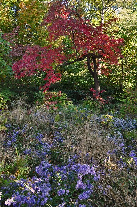 Peirce's Woods (3)