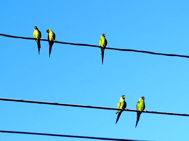 morning parrots