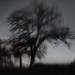 Tree of Dreams by Velaeda