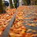 Fall in Brooklyn by George Leeuwarden