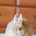 IMG_4152-1 by Rabbit's Album