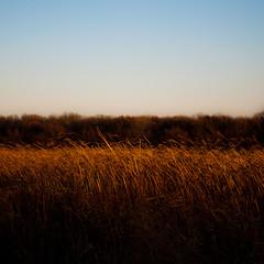 Wetland Prairie Landscape