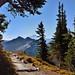 A Walk in the Wood Along the Skyline Trail (Mount Rainier National Park) by thor_mark 