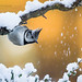Crested Tit With Falling Snow by cjdolfin