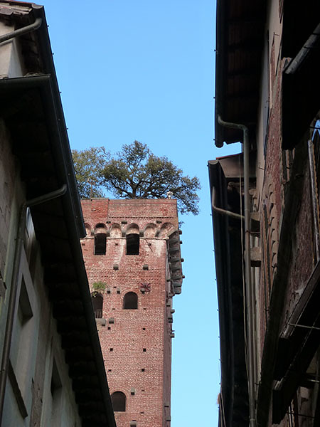 les oliviers de la tour