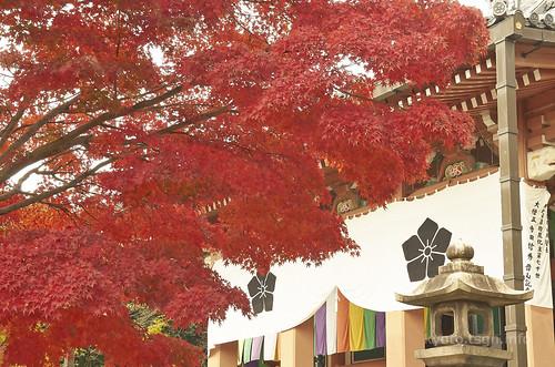 【写真】2014 紅葉 : 智積院/2020-09-07/IMGP7562