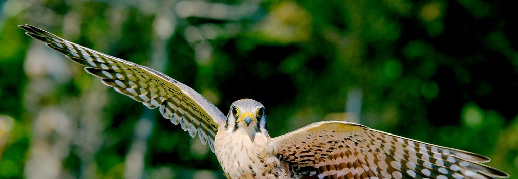 Hawks_0101