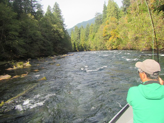 fishing the mckenzie river in fall caddisflyshop.com