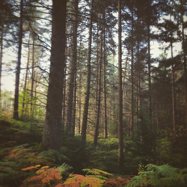 Dalbeattie Woods #dalbeattiewoods #7stanes