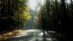 morning sun through the trees