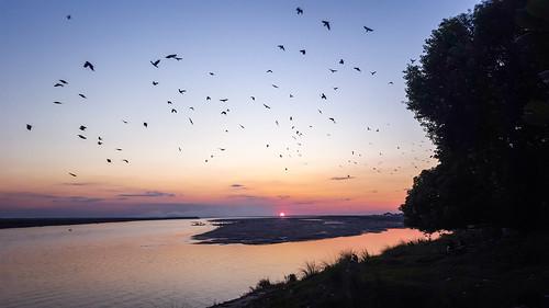 blue sunset cloud sun tree birds dark boats evening twilight snapshot crow birdwatching bangladesh riverbeach citybirds rajshahi smokycloud bankofpadmariverrajshahi padmagarden samsunggalaxys6
