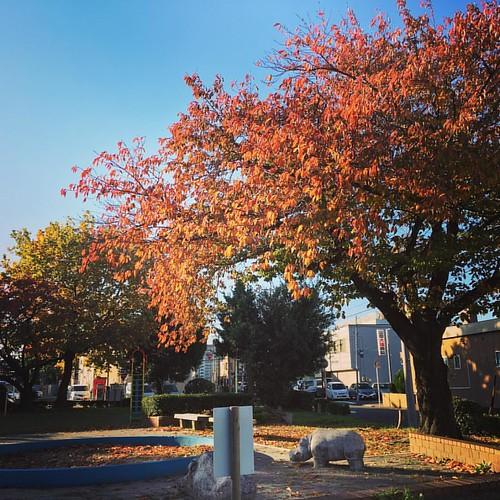 #fall #fall🍁 #fallenleaves