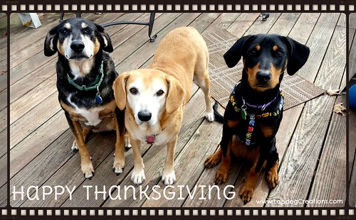 LapdogCreations Wishes You A Happy Thanksgiving - coonhound, hound, Doberman dogs