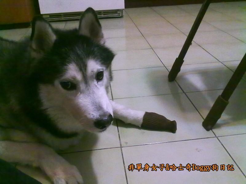 Doggy穿兒童襪05