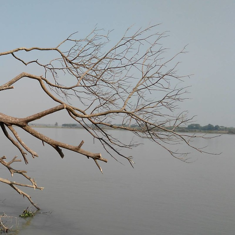 Generation & Destruction by river #Damodar #island #tree #river #instanature
