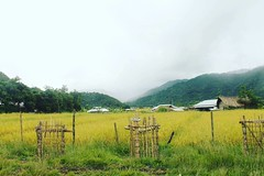 The beauty of the paddy fields of Khoupom Valley can't be explained with usual adjectives! #Manipur #northeast #Northeastindia #Rongmaei #Thanagong #Khoupom #Valley #India #IncredibleIndia #Tamenglong #northeasttourism