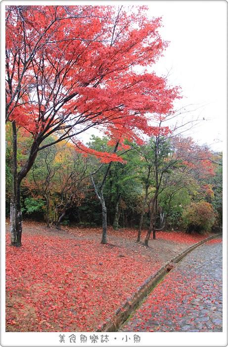 【日本旅遊】京都嵐山 龜山公園展望台 絕世賞楓美景