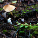 Through the Underbrush by astroberkman17