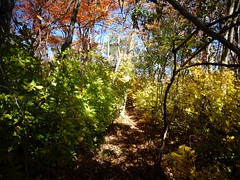 Mill Pond Park -- Autumn (54)