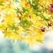 Autumn colors by Dalang55555