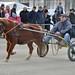 Kasaške dirke v Komendi 4.12.2016 Poniji