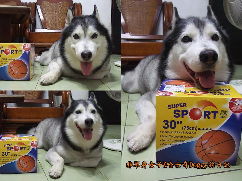 2012哈士奇doggy寵物玩具08大球