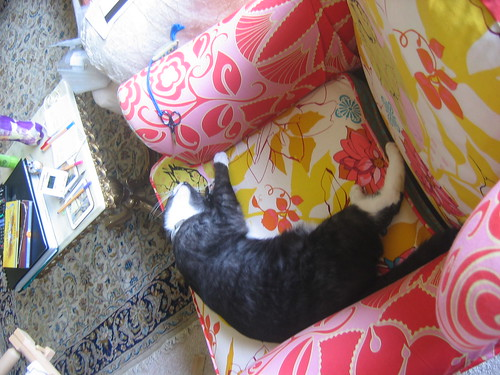 Cat on sewing chair